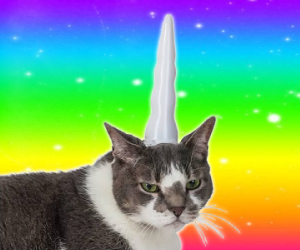 cat unicorn horn