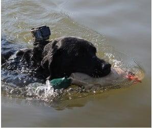 GoPro Dog Harness