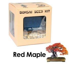 Red Maple Bonsai Seed Kit
