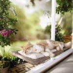 Cat Window Bet