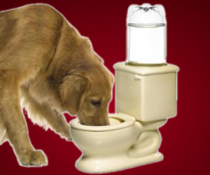 Dog Toilet Bowl