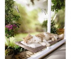 Cat Window Bet